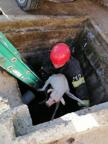 Bombeiros militares resgatam cachorro preso em um bueiro