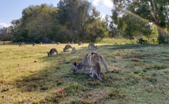 image for Coombabah Lakelands