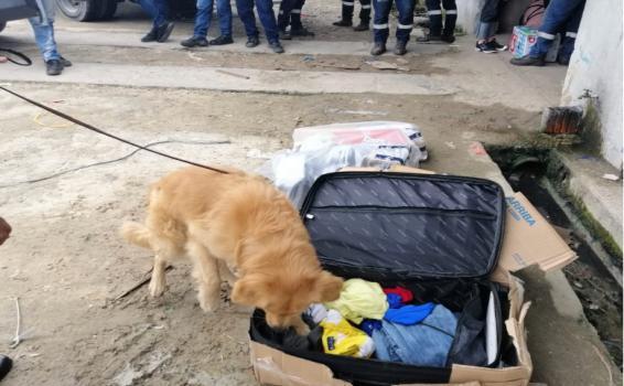 Perro oliendo una maleta