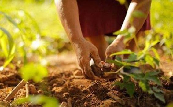 image for ADR cumple con meta de Agricultura por Contrato para 2020