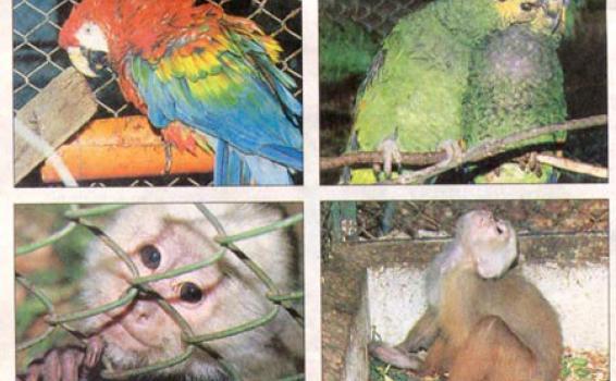 image for Castigan con cárcel el tráfico de fauna y flora silvestres