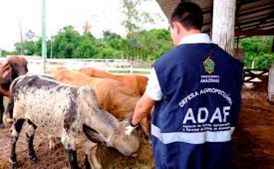 Pessoa frente a gado fiscalizando