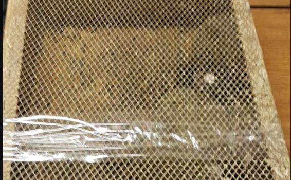 image for Detienen un auto llevaba más de 200 animales exóticos