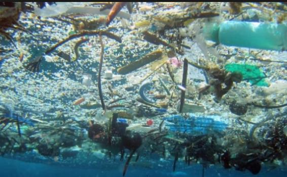Mar con basura peligrosa para la fauna