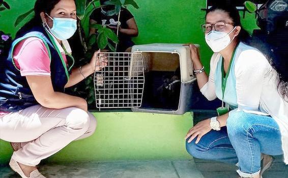 image for Rescatan monos choros en Yurimaguas