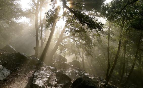 Paisaje a dentro de un bosque