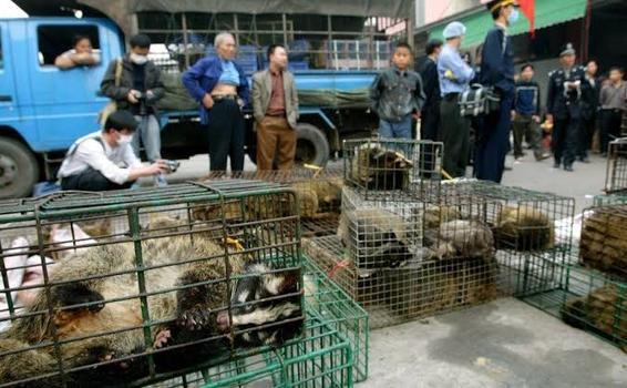 Vietnam prohibió importación y el comercio de animales salvajes