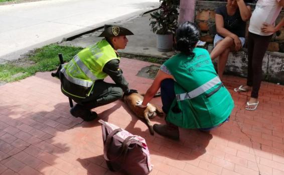 POLICÍA JUNTO A LA SECRETARIA DEL MEDIO AMBIENTE MUNICIPAL REALIZA ACTIVIDADES DE CONTROL AL MALTRATO ANIMAL