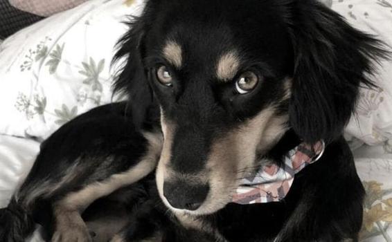 Muerte de perro Mambo en Nilo será investigada por la Fiscalía