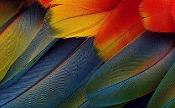 AMAZONAS UNA VIDA ENTRE LUCES Y SOMBRAS