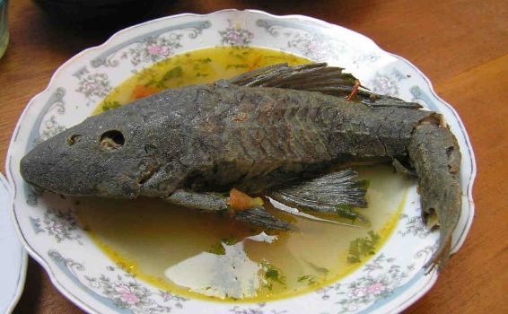 Caldo de chucha servida en un plato