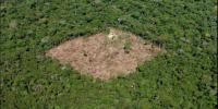 Selva deforestacion