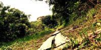 Camino en lugares aledaños a la ciudad de Leticia