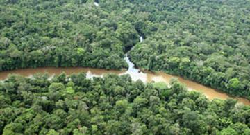 image for Representantes a la Cámara por el Amazonas votaron a favor de explotar petróleo
