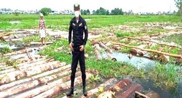image for Medio millón de soles incautado en madera