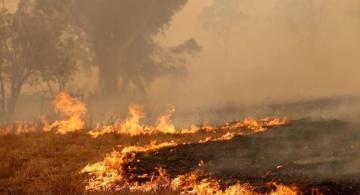 image for Evacuaciones en  Australia por incendios que ya dejan 17 muertos