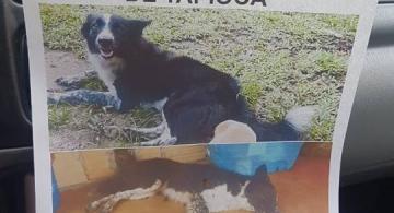 Afiche de perro desaparecido
