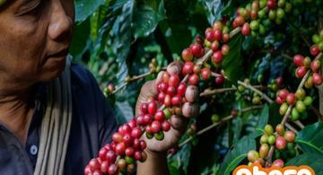 image for Productores de café participan en gran feria orgánica mundial