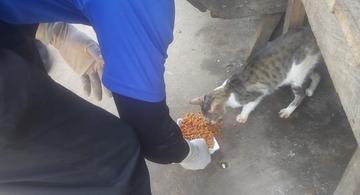 image for Mascotas que se encuentran en estado de abandono reciben alimentos