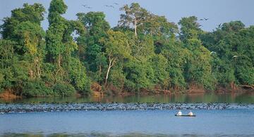 image for Loreto Líder en la conservación de la biodiversidad amazónica