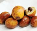 Fotos de frutos Amazonas