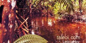 Paisajes por la selva de Leticia Amazonas
