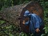 image for Detienen sospechosos acusados de talar miles de árboles en la Amazonía