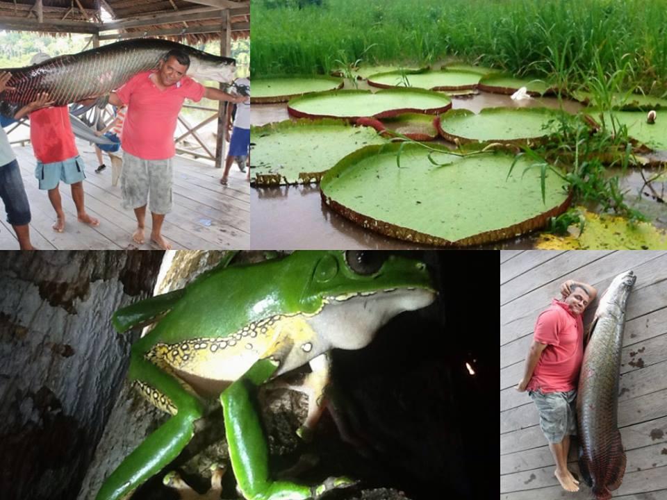 Imagenes de fauna del Amazonas